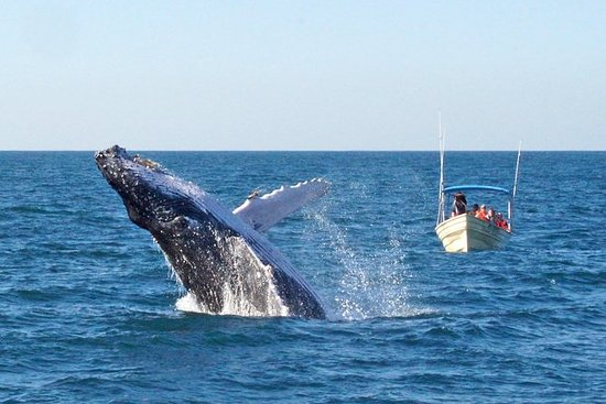 Whale Watching Expedition i Mazatlan