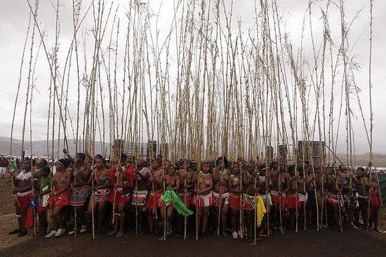 Årlig Royal Zulu Reed Dance