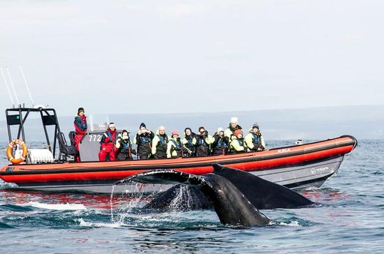 Giro in barca della Whale Watching