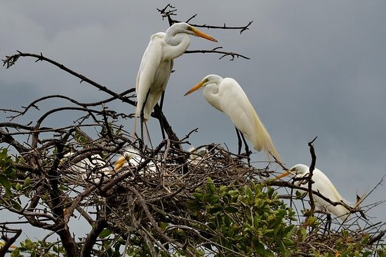San Jacinto温泉和Juan Venado野生动物保护区乘船游览