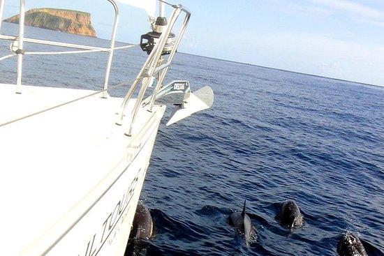 2 Hour Sailing Trip Around Angra's Bay