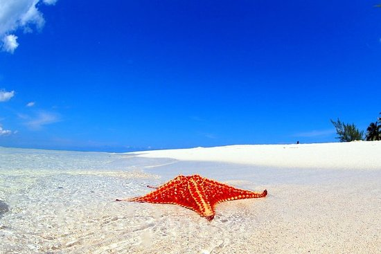 Starfish and Stingray City Adventure...
