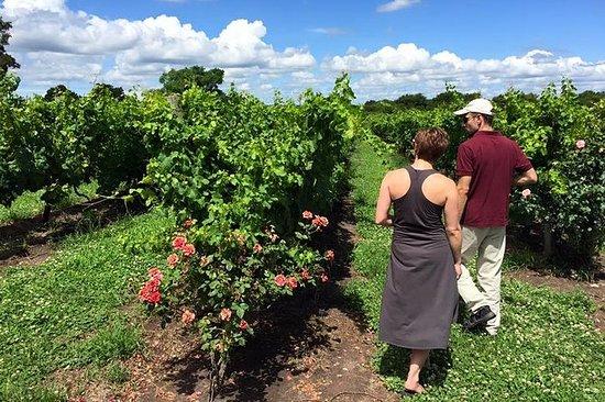 Montevideo Winery besøk og parret...
