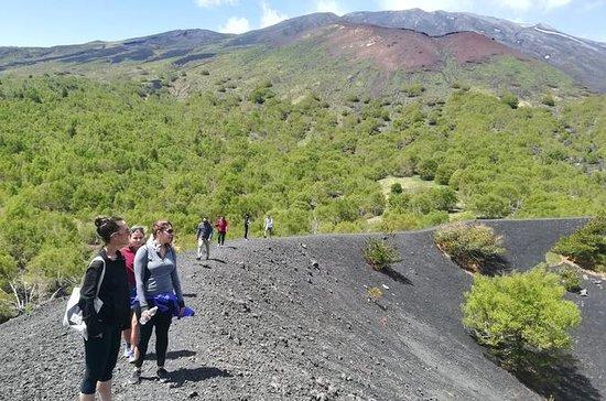 Tour di mezza giornata sull'Etna