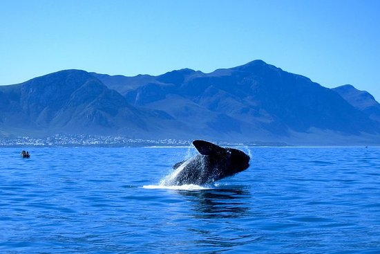 Whale Watching Private Day Tour to...