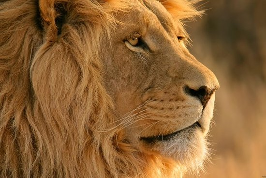 Big-Five Safari Full Day Private...