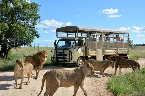Lion Park Half-Day Tour from...