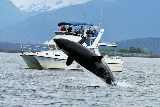 Whale Watching and Wildlife Adventure...