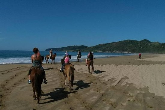 Horseback Riding on the Beach and...