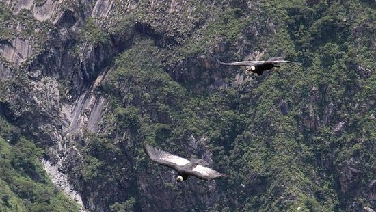 Apurimac Canyon med Condor visning...