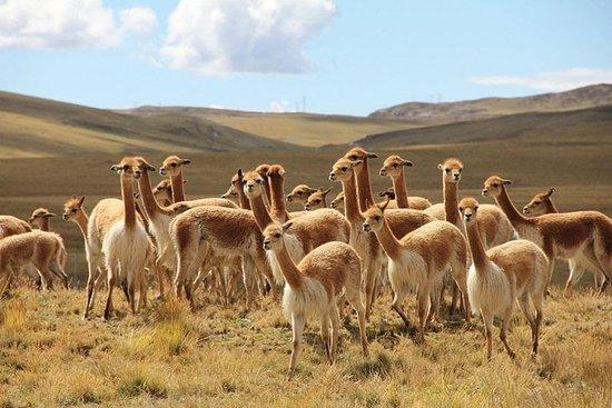 Excursão de reserva de meio dia a Pampa Galeras de Nazca