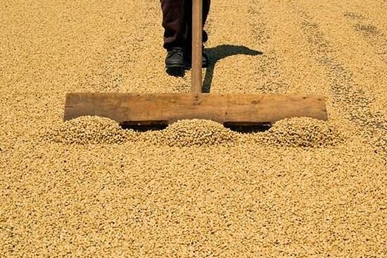 Doka Coffee Plantation, Grecia and...