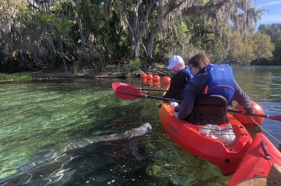Manatee Kayak Tour at Blue Springs...