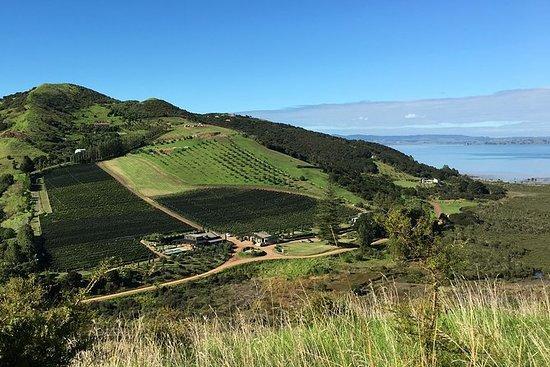 Halfdaagse wijngaarden en bushwalk op ...