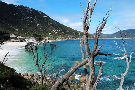 Wilsons Promontory Hiking Tour from...