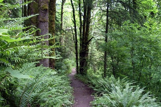Guidet tur i Portlands skogspark