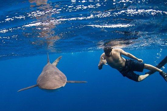 Demi-journée de plongée avec tuba ou...