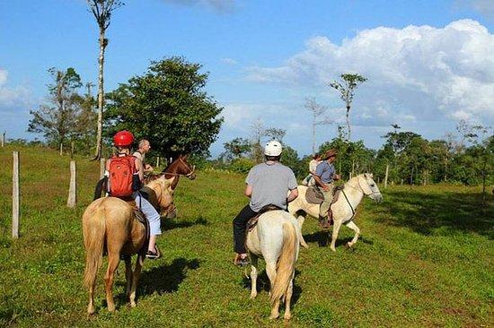 モンテベルデの乗馬ツアー