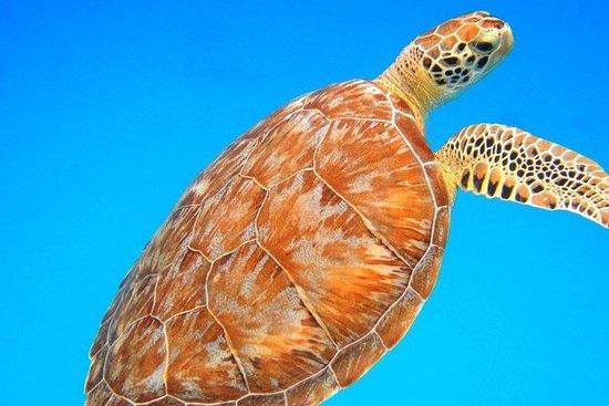Mergulho à tarde com tartarugas...