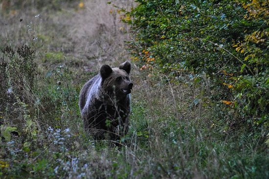 Private Brown Bear Watching ...