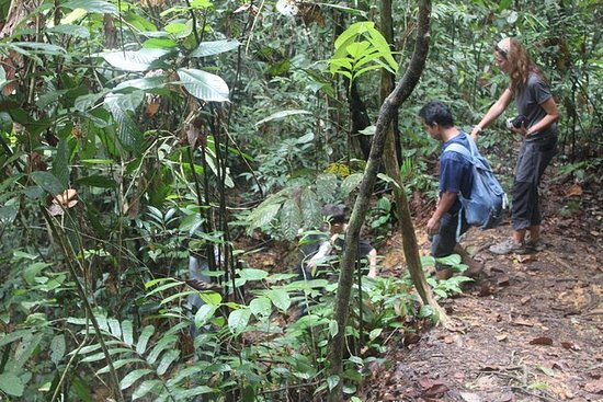 Tour privato: Mezza giornata Bukit