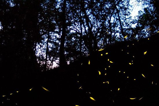 Tour of Fireflies Nights from Mexico...