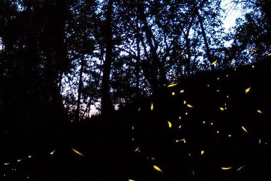 Tour of Glowworm Nights fra Mexico City