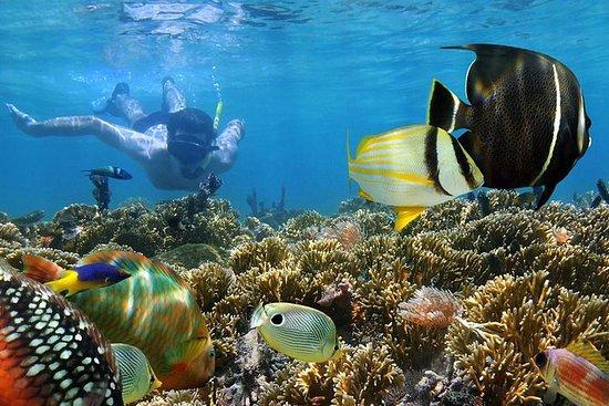 Viaje de snorkel y excursión desde el...