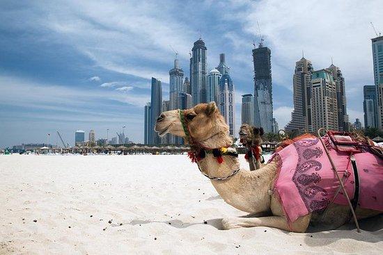 Dubai Full-Day City Tour med lunsj og...