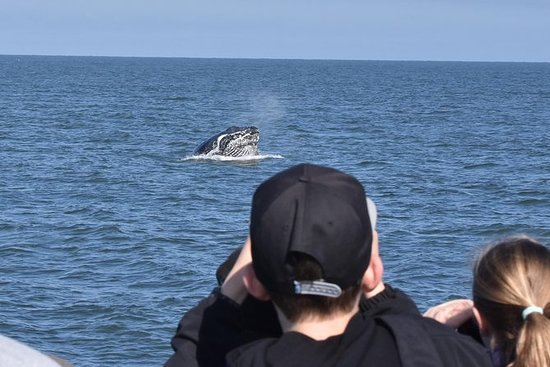 Whale Watching to Victoria from...