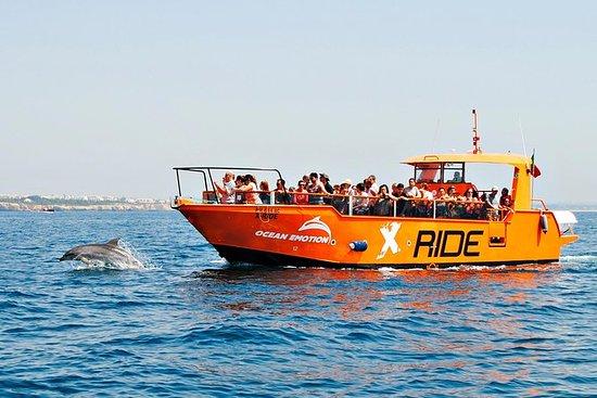 Crucero de avistamiento de delfines y...
