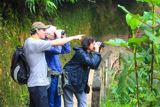 Birdwatching Tour in Tinajillas...