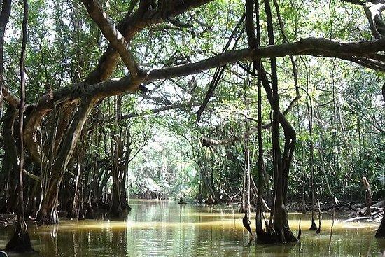 Full-Day Little Amazon and Sri Phang...