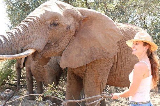 Lesedi Cultural Village Elephant...