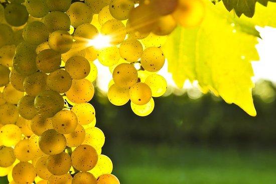 Tour de vinho de meio dia em Blenheim