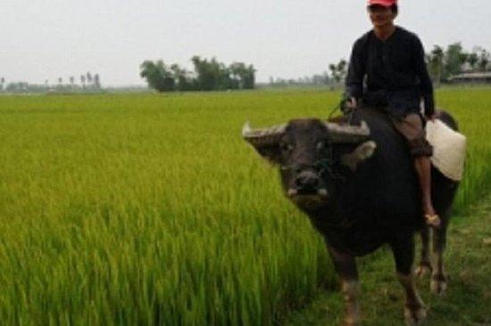 Hoi An Buffalo Cart Expérience de Hoi An