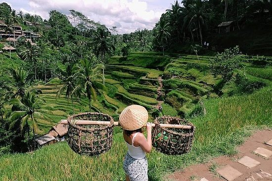 Ubud Special Guided Tour