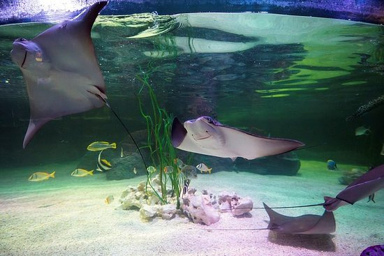 SEA LIFE Loch Lomond General Admission
