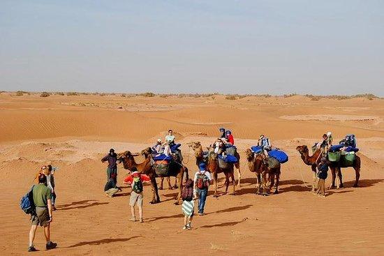 Desert Adventure Safari 3 days from...