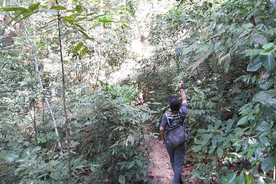 Kuala Lumpur Rainforest Day Tour