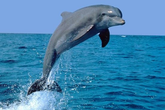 Dolphin Experience in Open Sea and...