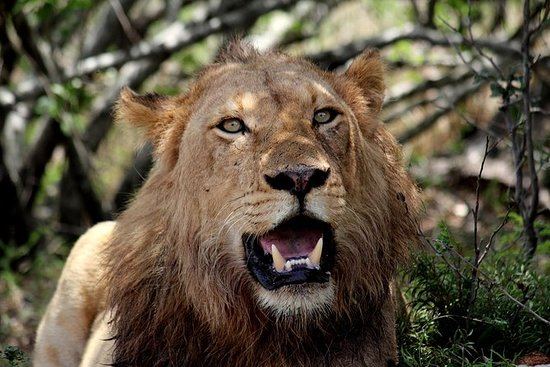 Kruger National Park - 3 dagen (Open ...