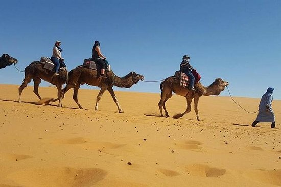 Camel ride and Camp Night in Merzouga
