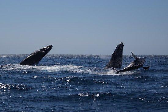 Avistamiento de ballenas en el cabo