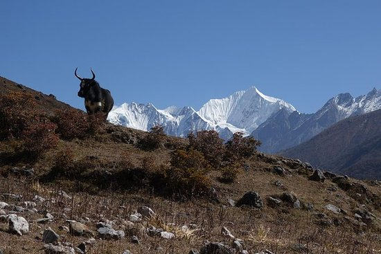 Langtang Valley Special Tour