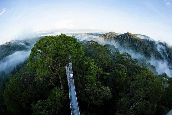 Sumbiling Temburong Canopy Walk...