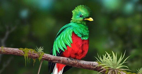 Quetzales scarlet macaws och fåglar ...