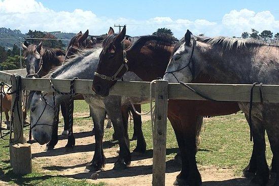 1-timers Horse Bush Trail Ride på...