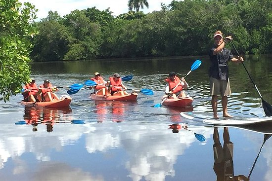 Naples FL, Kayak Mangrove Forest Tour