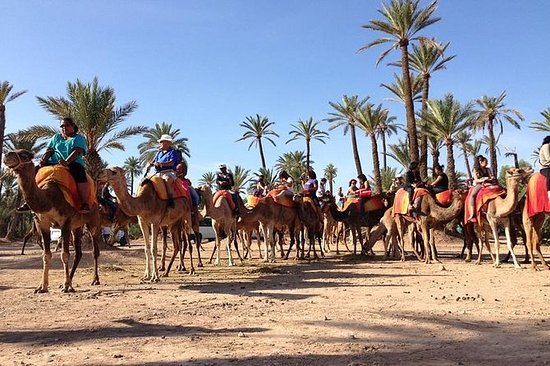 Camel Ride i Palm Grove i Marrakech